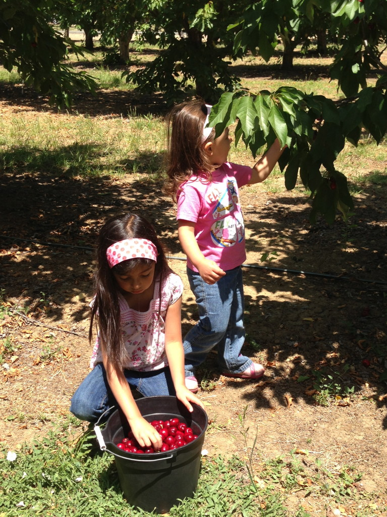 "A picking cherries and H sorting out the ""bad"" ones"